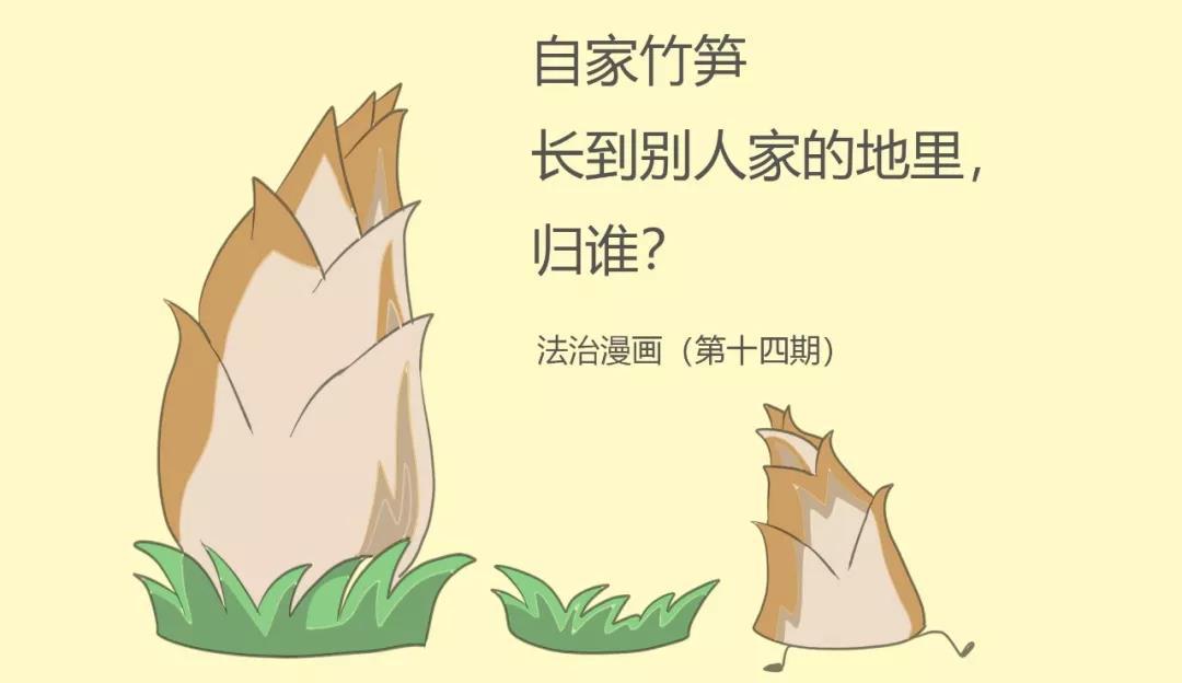 【法治漫画】自家竹笋长到别人家的地里,归谁?