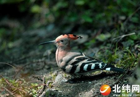 不仅是野生动物保护人员发现了动物们活动