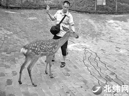 游客在看了动物的精彩表演后,禁不住称赞动物的聪明可爱,流露出对动
