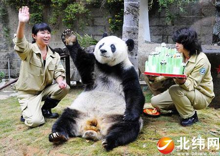 有黑白画大熊猫