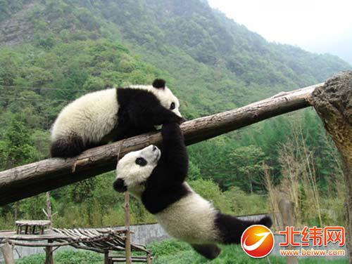 """打造大熊猫的""""诺亚方舟"""""""