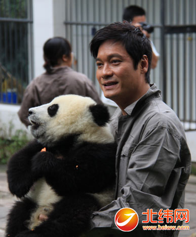 而可爱的大熊猫宝宝们也以活泼好动,憨态可掬的可爱模样深深吸引着