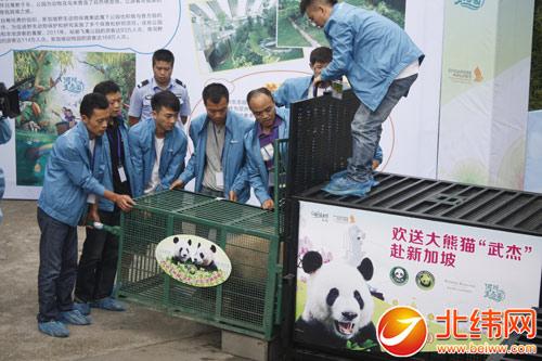 新加坡野生动物保育集团主席张齐娥