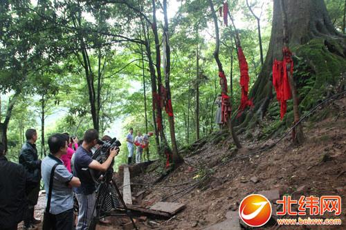 雅安红豆树 七月将亮相央视