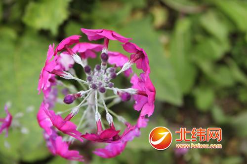 好看花儿的微信头像图片