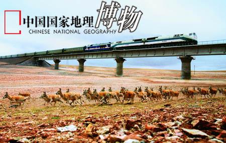 青藏铁路沿线的野生动物