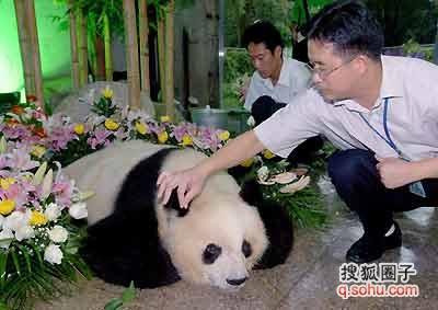 历史上曾经年龄最大的大熊猫