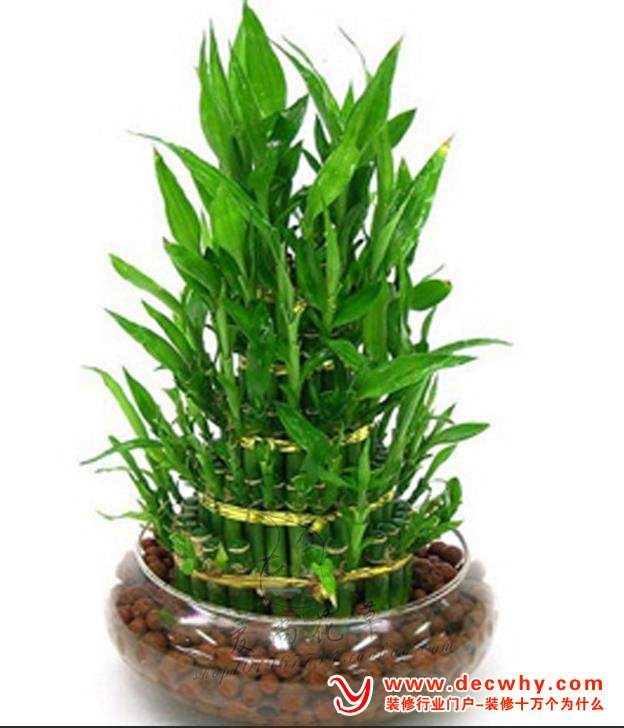 室內大盆栽竹葉形狀